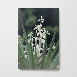 White Beauty Confined Metal Print