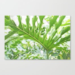 Philodendron leaf Canvas Print