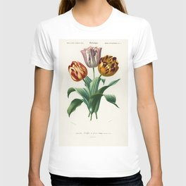 Maules quince (Cydonia japonica) illustrated by Charles Dessalines D Orbigny (1806-1876) T-shirt