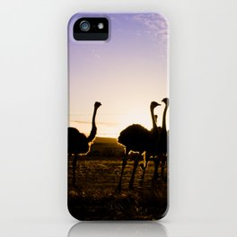 Ostriches at sunset iPhone Case