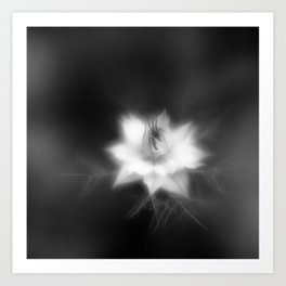 Botanica Obscura #6 Art Print