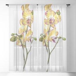 Yellow Phalaenopsis Orchid Traditional Artwork Sheer Curtain