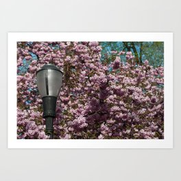 Blossoms and a Lamp Post Art Print