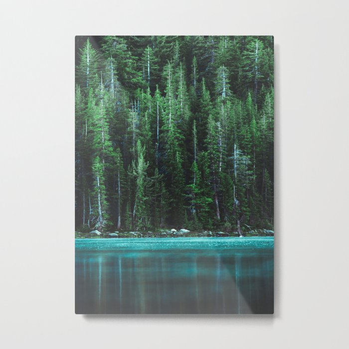 Forest 3 Metal Print