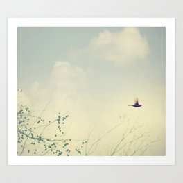 Cardinale Flight Art Print