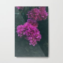 Bougainvillea Flower Metal Print
