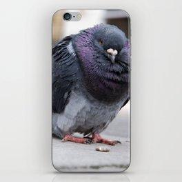 Mr Pigeon iPhone Skin
