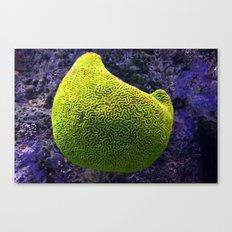 Lime green sea creature Canvas Print