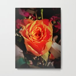 Variegated Rose  Metal Print