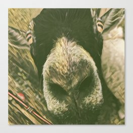 Curious Goat Canvas Print