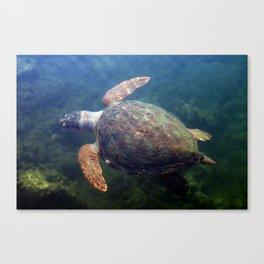 Underwater Tortoise Canvas Print