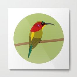 Handsome Sunbird Metal Print