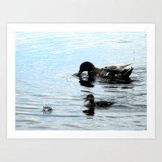 Duck 03 Art Print