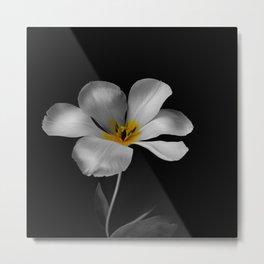Moon Tulip Metal Print