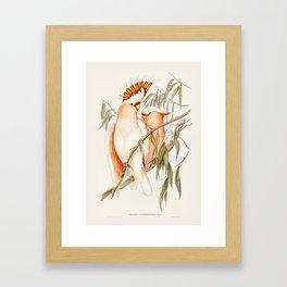 Cacatua Framed Art Print