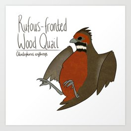 Rufous-fronted Wood Quail Art Print