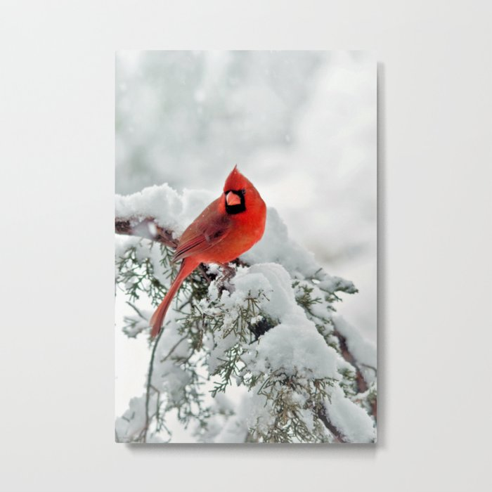 Cardinal on a Snowy Branch Metal Print
