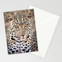 Majestic African Leopard Big Cat Stationery Cards