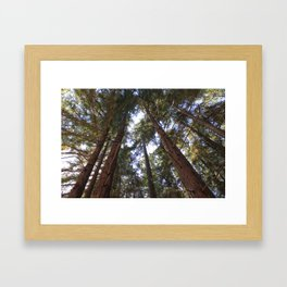 Redwoods in California  Framed Art Print