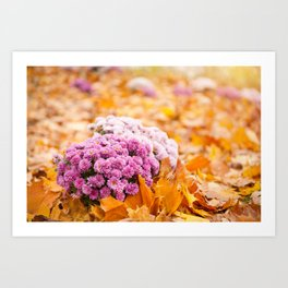 Flowering clump of pink Chrysanths Art Print