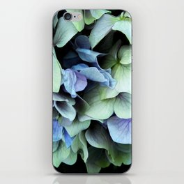 green and blue hydrangea iPhone Skin
