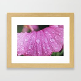 Rain Drops on Flower - Plant Photography Framed Art Print