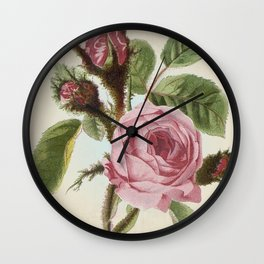 Moss Rose - Vintage Style Seed Packet Wall Clock