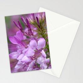 Cleome No. 27 Stationery Cards
