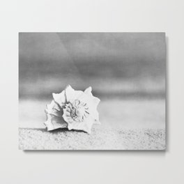 Black and White Beach Photography, Grey Seashell Art, Neutral Shell Photo, Gray Conch Shell Print Metal Print