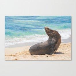 Sea lion sunbathing on beach Canvas Print