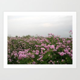 Patch of flowers Art Print