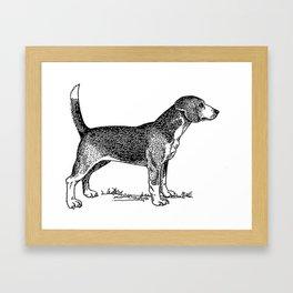 Curious Beagle Dog Framed Art Print