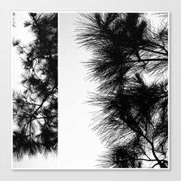 Mediterranean black and white pine tree Canvas Print