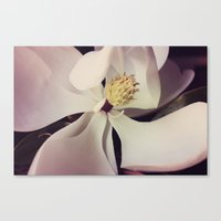 magnolia Canvas Prints featuring Magnolia by Deepti Munshaw