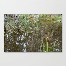 Pond's reflection Canvas Print
