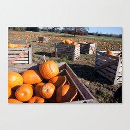 Crate of Pumpkins Canvas Print