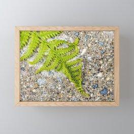 Fern 6 Framed Mini Art Print