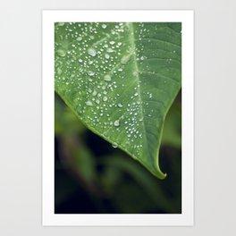 Misty Leaf Art Print