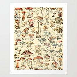 Trippy Vintage Mushroom Chart // Champignons by Adolphe Millot XL 19th Century Science Artwork Art Print