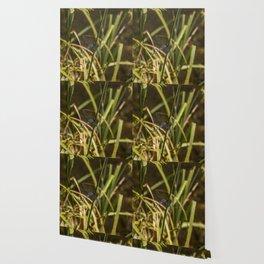Dragonfly in the marsh Wallpaper