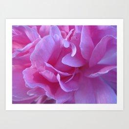 petals pink Art Print