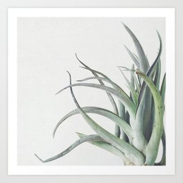 Air Plant II Art Print