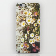 Wall of Daisies iPhone & iPod Skin