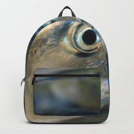 Big eye, tuna, fish, still life, photo, fine art, print, nature, sea, fishing, detail, blue Backpack