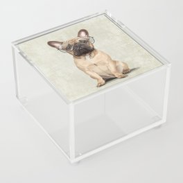 Mr French Bulldog Acrylic Box