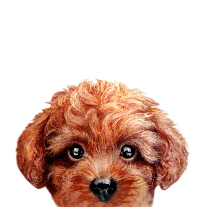 Toy poodle red brown Dog illustration original painting print Comforters