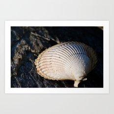 Sun Shell Art Print