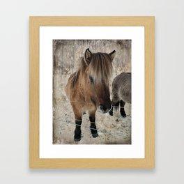 snowy Icelandic horse Framed Art Print