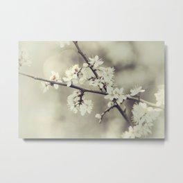 crossed blossoms Metal Print