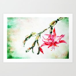 Winter Cactus-Schlumbergera Art Print